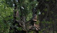从木屑到森林:木材的3D打印之旅
